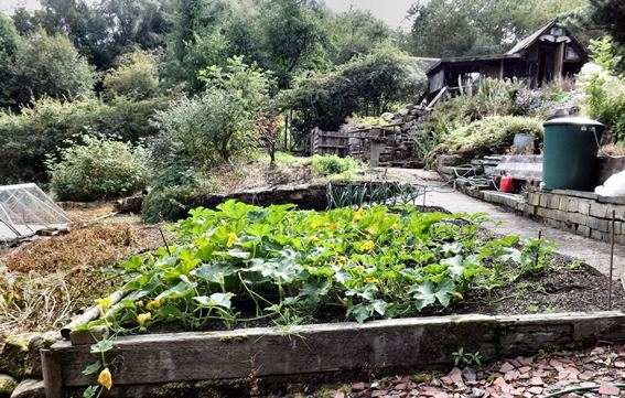 An entire edible city: it's not a dream that could never come true but Pam Warhurst's ambitious project called Incredible Edible. In Todmorden, in England, she managed to get local authorities and citizens involved in the creation of many spaces for shared cultivation