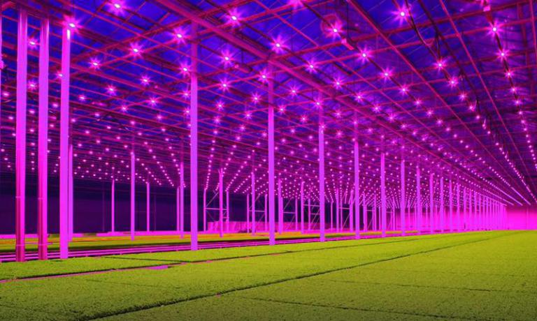 The colours are authentic: this is the super-technological greenhouse at Koppert Cress, the Dutch giant of micro greens. It's the new frontier for indoor farming for fine dining and beyond. According to their managers, this is the agriculture of the future