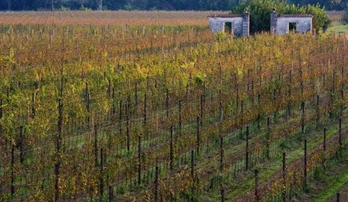 Villa Job's vineyards in Pozzuolo del Friuli (Ud), +39.0432.562555. A young Tuscan man, commuting between Milan the North-East, Alessandro Job (pronounced iob) founded this winery 5 years ago, giving it almost immediately an organic focus