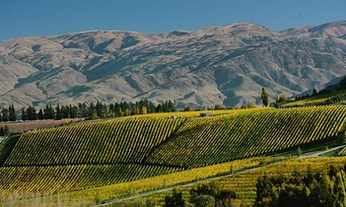 A panoramic view of Burn Cottage, a very reserved producer of structured wines in the sub-region of Central Otago, in New Zealand