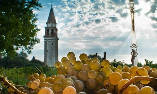 Dorona grapes and the bell-tower of Santa Caterina, the last of the 15 Medieval churches that used to be in Mazzorbo, an island in Venice's lagoon. This is the heart of the Venissa wine project, created by Gianluca and Desiderio Bisol right in Mazzorbo. The building also hosts Antonia Klugmann's restaurant