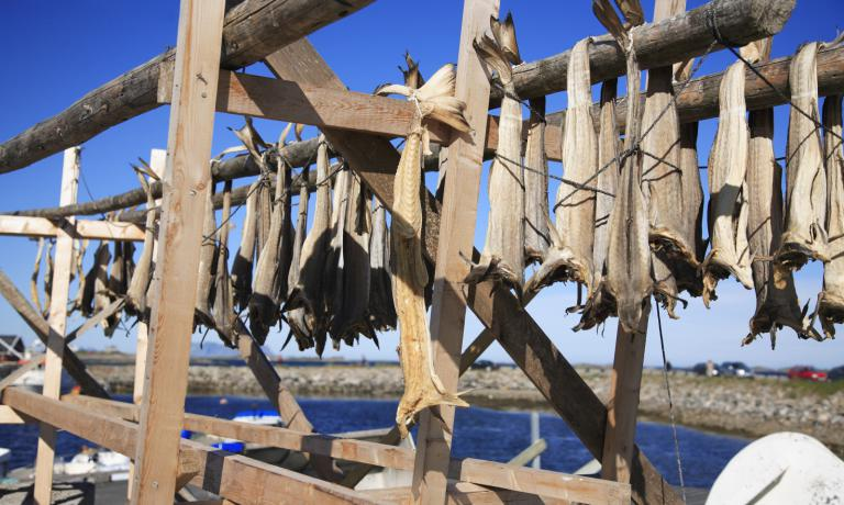 Stockfish left to dry in the Lofoten Islands