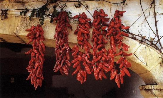 While bizkaina is the sauce that best characterises the Basque culinary tradition, pimientos choriceros are an essential ingredient