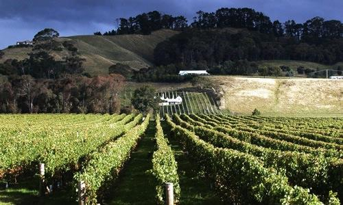 A view of Hawke's Bay, one of New Zealand's 16 regions, on the East Coast of North Island. In this area, wine orders around and restaurants aren't joking either. The region's capital is Napier (photo credits www.capesouth.co.nz)
