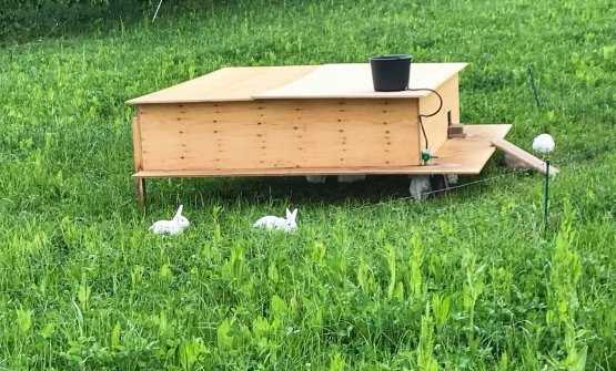 The first organic rabbits in Denmark