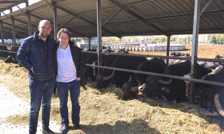 Jacques Genin (to the right) with Raffaele Barlotti in front of the buffalos in the latter�s breeding, in Paestum. Genin was one of the speakers at Le Strade della Mozzarella