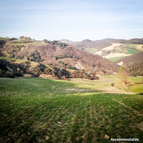 We return on our walk on the green hills of the Marche: this time to meet agronomist Oriana Porfini, who thanks to her meticulous research creates a raw material that is then to be used by firms such as Prometeo and Mancini