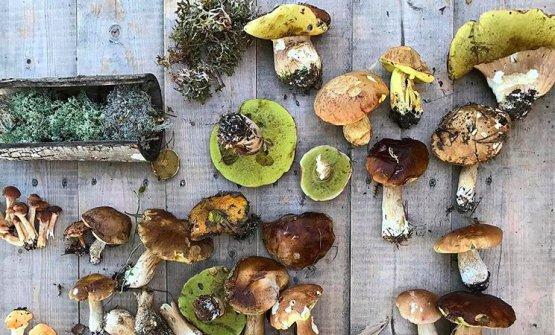 Mushrooms taken out of island Håøya, nearOslo