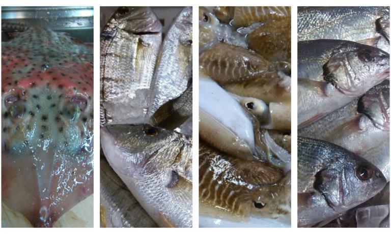 The real catch in Versilia: ray, mormore, squid, umbrine (photo Simona Fantoni)