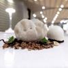 Terra di Langa: fake truffle with white chocolate, choux pastry with Jerusalem artichoke, cream and hazelnut crumble, porcini gelato, white truffle from Alba